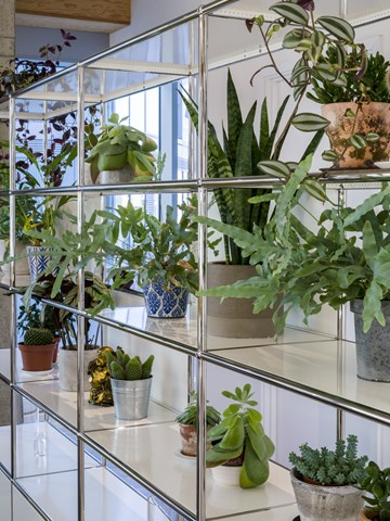 White USM Haller shelving to hold a range of plants